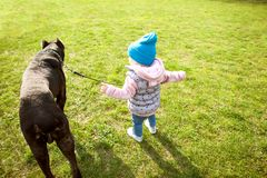 Little girl is walking in the park with her big dog. Back view Stock Photography