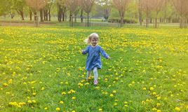 Little girl walking in the park, springtime. Cute little girl walking in the park with dandelion flowers, spring time, sunny day Royalty Free Stock Photos