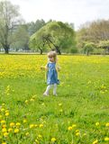 Little girl walking in the park, springtime. Cute little girl walking in the park with dandelion flowers, spring time, sunny day Royalty Free Stock Photography