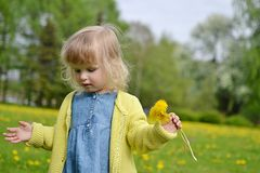 Little girl walking in the park, springtime. Cute little girl walking in the park with dandelion flowers, spring time, sunny day Stock Photos