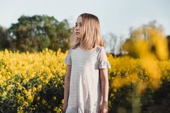 Little girl walking in a rapeseed field royalty free stock photos