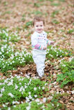 Little girl walking in a spring park with white flowers Royalty Free Stock Images