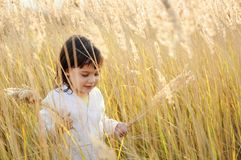 Little girl walks on the field Stock Images