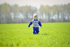 A little girl walks in a field. Royalty Free Stock Photos