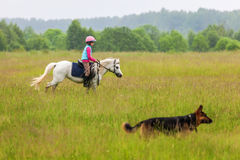 A little girl walks on a horse is a German Shepherd close  Outdoors Stock Image