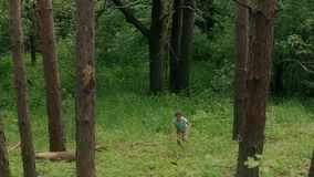 Little girl walks in the pine forest stock footage