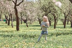 Little girl walks in the spring blooming garden. Photo with copy space royalty free stock photography