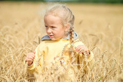 Little girl walks through a wheat field royalty free stock photo