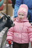The little girl watchfully and almost scaredly looks. At a little goat Royalty Free Stock Images