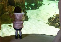 Little girl watching fishes in a large aquarium stock photos