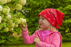 Little girl watching flowers Royalty Free Stock Images