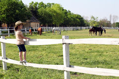 Little girl watching horses Stock Photo