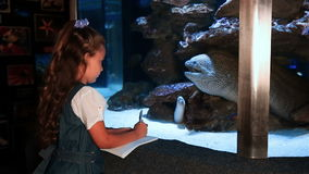 Little girl watching tropical fish swimming in a tank. At the aquarium stock video
