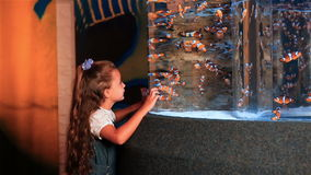 Little girl watching tropical fish swimming in a tank stock footage
