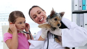 Little girl watching vet checking her yorkshire terrier Stock Photos