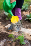 Little Girl Water Watering Can Cucumber In Garden. Royalty Free Stock Image