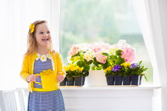Little girl watering blooming flowers at home. Cute girl watering first spring flowers. Easter home interior and decoration. Child taking care of plants. Kid stock photography