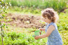 The little girl with the watering can in the garden. Horizontal photo of a toddler girl watering vegetable garden bed Royalty Free Stock Photo