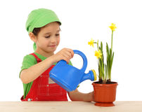 Little girl watering the daffodil Stock Photography