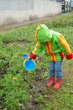 Little girl watering flowers from a bucket. Outdoor Royalty Free Stock Photos