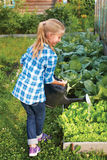 Little girl watering the flowers in the family garden Stock Images