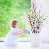 Little girl watering flowers at home. Cute little girl, funny toddler with curly hair wearing a blue festive dress, watering flowers - cherry blossom tree at stock photography