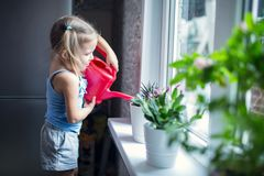 Little girl is watering flowers on the window Royalty Free Stock Photo