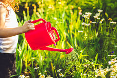 Little girl  watering a plant with watering can. Instagram filte Royalty Free Stock Photography