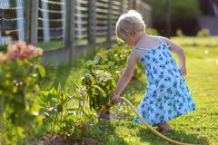 Little girl watering plants in the garden Stock Image