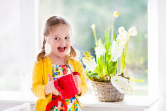 Little girl watering spring flowers. Cute girl watering first spring flowers. Easter home interior and decoration. Child taking care of plants. Kid with water royalty free stock image