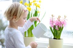 Little girl watering spring flowers at home. Cute little child, blonde curly toddler girl, giving water to beautiful hyacinth and narcissus flowers standing next royalty free stock photography
