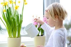 Little girl watering spring flowers at home. Cute little child, blonde curly toddler girl, giving water to beautiful hyacinth and narcissus flowers standing next stock photos