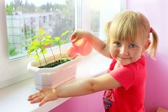 Little girl watering young plants in pot. Sandy desert behind window of room where little girl living