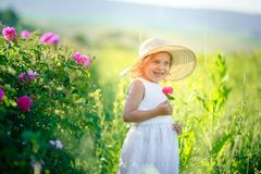 A little girl wearing flower yellow dress with white hat and stand in the yellow flower field of Sunn Hemp Crotalaria royalty free stock photos