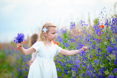 Little girl wearing white dress picking blue wild flowers in a f. Ield Royalty Free Stock Photo