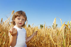 Little girl  on a wheat field Royalty Free Stock Photo