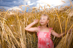Little girl in wheat field Royalty Free Stock Photography