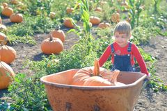 Little girl with wheelbarrow and pumpkins at farm field patch Stock Photo