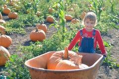 Little girl with wheelbarrow and pumpkins at farm field patch Stock Photos