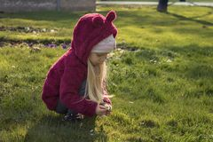 Little girl collecting flowers on first spring day Stock Images