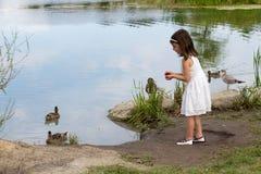 Little girl in white dress feeding ducks at the pond Stock Image