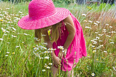 Little girl in wild daisies Stock Images