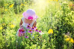 Little Girl, Wildflowers, Meadow Stock Images