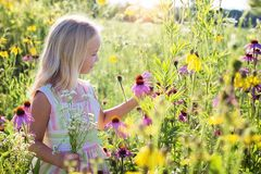Little Girl, Wildflowers, Meadow Royalty Free Stock Photos
