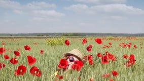 Little girl in windy green wheat field with poppy flowers stock video