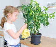 Little girl wipes dust from the flower. Stock Photography