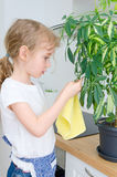 Little girl wipes dust from the flower. Stock Photos