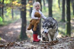 Free Little Girl With Dog In Autumn Forest. Child Play With Husky And Teddy Bear On Fresh Air Outdoor. Childhood, Game And Stock Photography - 118197422