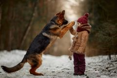 Little Girl With German Shepherd 6-th Months Puppy At Early Spring Royalty Free Stock Images