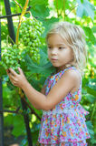 Little Girl With Pigtails Holding Bunch Of Grapes Royalty Free Stock Photography